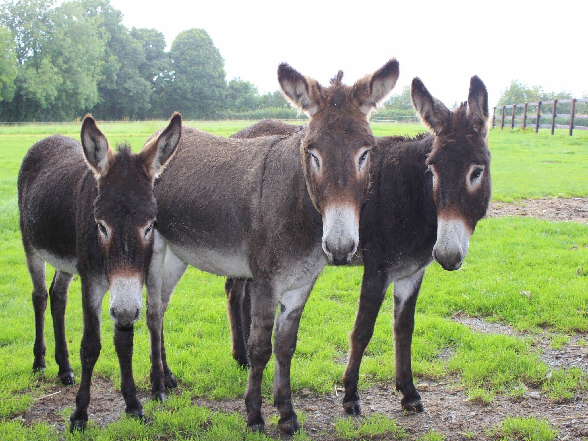 The Good Samaritan Donkey Sanctuary